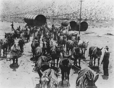 52-mules-haul-siphon-pipe-laa-553