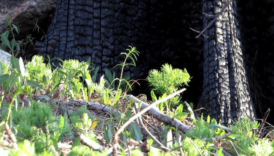 2016 Regen 3 Solitaire Nest